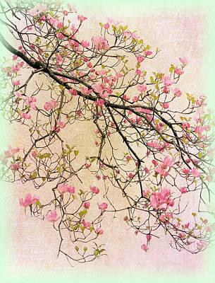 Dogwood Blossom Photograph - Dogwood Canvas 2 by Jessica Jenney
