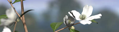 Panoramic Digital Art - Dogwood by Cynthia Decker