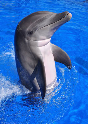 Photograph - Dolphin At Play by Sheila Kay McIntyre