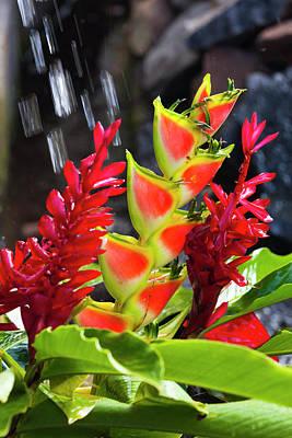 Dominica, Roseau, Tropical Vegetation Art Print by Walter Bibikow