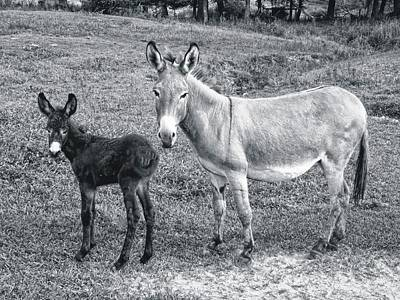 Photograph - Donkey Debut by Joe Duket