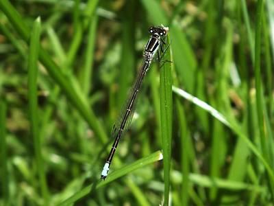 Photograph - Dragonfly by Gene Cyr