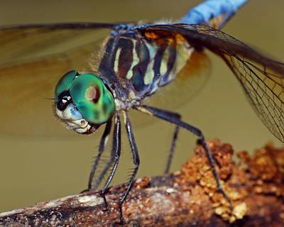 Kim Fearheiley Photography - Dragonfly by Larah McElroy