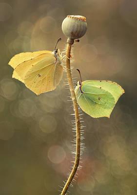 Photograph - Duet by Jaroslaw Blaminsky