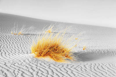 Photograph - Dune Grass by Alexey Stiop