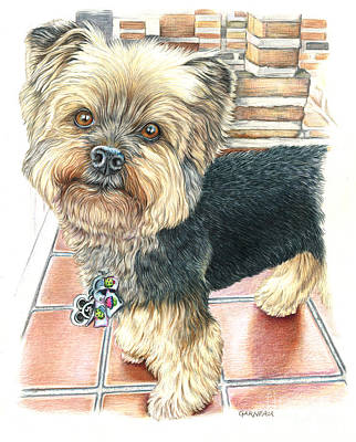 Yorkshire Terrier Wall Art - Drawing - Dutch by Catherine Garneau