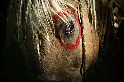 Indian Pony Photograph - Eagle Eye by Lyndsey Warren