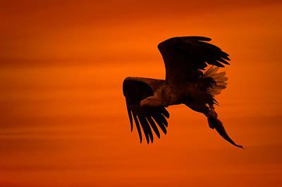 Eagle Silhouette Art Print by Andy Astbury