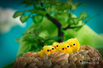Mythja Photograph - Easter Chicks by Mythja  Photography
