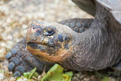Darwin Research Center Photograph - Ecuador, Galapagos Islands, Santa Cruz by Ellen Goff