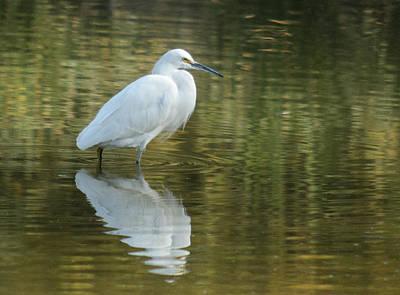 Photograph - Egret Reflection by Tam Ryan