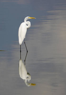 Egret Standing Art Print
