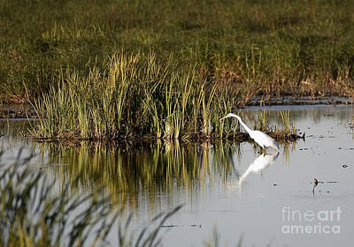 Photograph - Egret by Steven Ralser