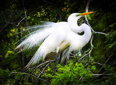 Birds Living In Nature Photograph - Elegance by Karen Wiles