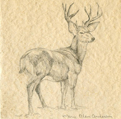 Art Print featuring the drawing Elk by Mary Ellen Anderson