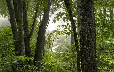 Enchanted Forest Art Print by Debra and Dave Vanderlaan