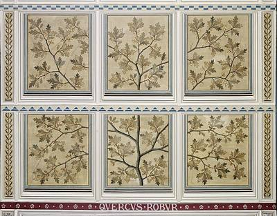 Natural History Museum London Photograph - English Oak (quercus Robur) by Science Photo Library