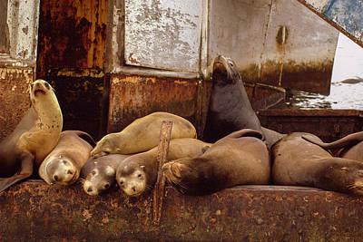 Whalen Photograph - Ensenda Seals by Josh Whalen