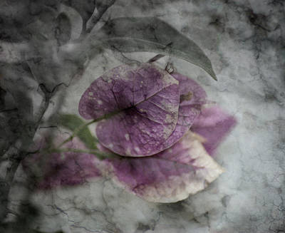 Manipulation Photograph - Epitaph by David Fox