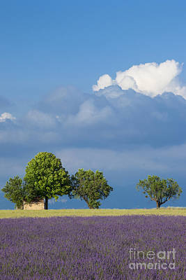 Photograph - Evening In Provence by Brian Jannsen
