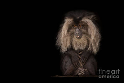 Express No Evil Print by Ashley Vincent