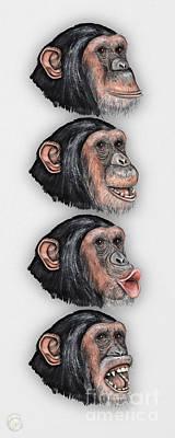 Animals Paintings - Facial Expressions of Chimpanzees Pan troglodytes - Zoo - Mimik Schimpansen - Stock illustration by Urft Valley Art \ Matt J G  Maassen-Pohlen