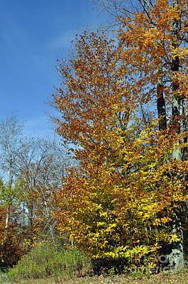 Photograph - Fall Colors by Doug Heavlow