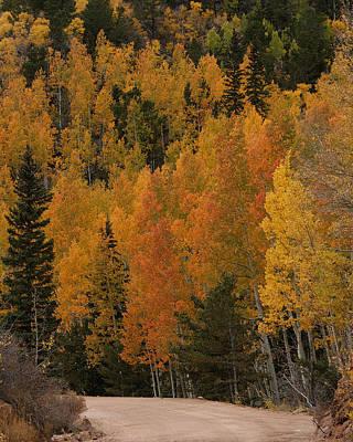 Photograph - Fall Colors by Ernie Echols
