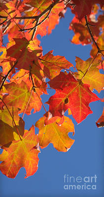 Photograph - Fall Colors by Rima Biswas