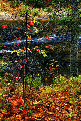 Algonquin Provincial Park Photograph - Fall Forest And River by Elena Elisseeva
