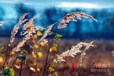 James Taylor Photograph - Fall by James Taylor