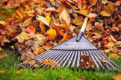 Photograph - Fall Leaves With Rake by Elena Elisseeva