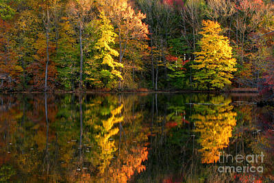 Fall Foliage Photograph - Fall Scene by Olivier Le Queinec