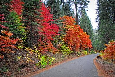 Photograph - Fall's Splendor by Lynn Bauer