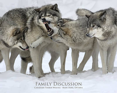 Gray Wolf Photograph - Family Discussion by Rudy Pohl