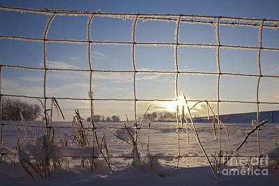 Photograph - Fence And Frost by Jim West