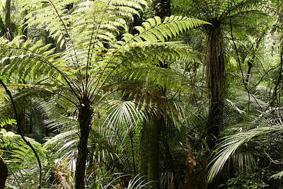 Tree Fern Photograph - Fern Trees by Les Cunliffe