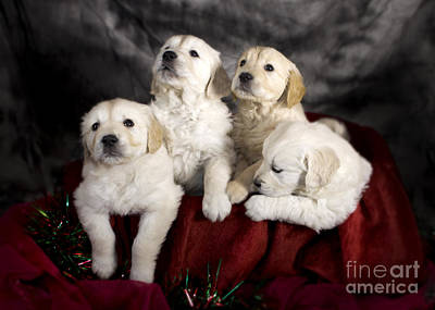 Festive Puppies Art Print by Angel  Tarantella