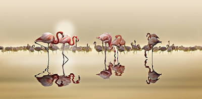 Water Bird Photograph - Flamingos by Nasser Osman