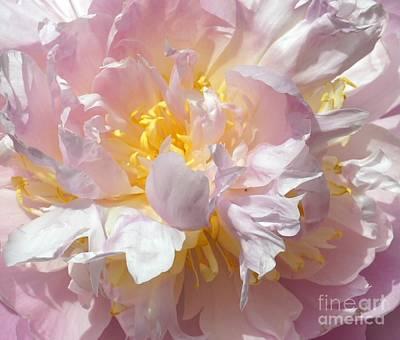 Clouds - Flirtatious Pink by Lilliana Mendez