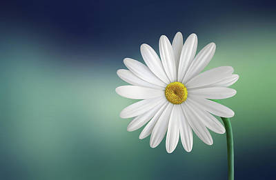 Daisy Photograph - Flower by Bess Hamiti