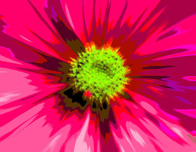 Photograph - Flower Explosion Colour by David French