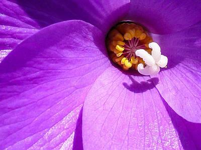Digital Art - Flower by Gandz Photography