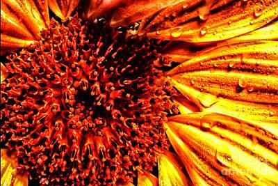 Flower Petals And Dewdrops Art Print by Thomas R Fletcher