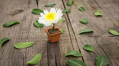 Fresh Flowers Photograph - Flower Pot by Aged Pixel