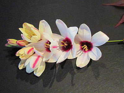 Photograph - Flowers by Joyce Woodhouse
