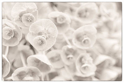 Photograph - Flowers Within Flowers by Lenny Carter