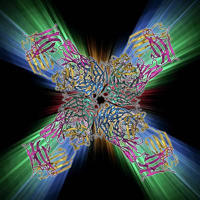 Flu Virus Surface Protein And Antibody Art Print by Laguna Design