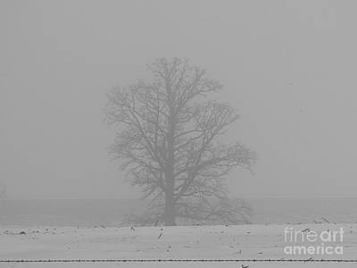 Photograph - Foggy Oak by David Bearden