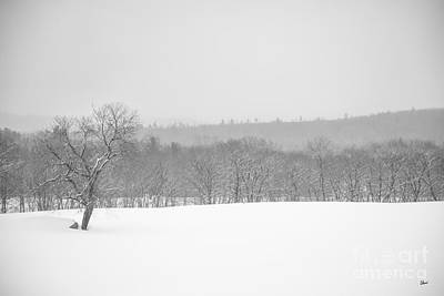 Photograph - Foggy Winters Day by Alana Ranney